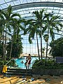 Palms in Romanian water park Therme București (47981469533).jpg
