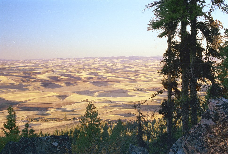 Palouse fields, Washington from Kamiak Butte
