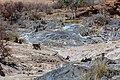 Papión chacma (Papio ursinus), parque nacional de Namib-Naukluft, Namibia, 2018-08-06, DD 07.jpg