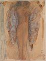 Papillon nocturne, femme nue debout et de face.jpg