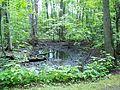Parc-nature du Bois-de-l-ile-Bizard 09.jpg