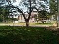Parc de L'Université de Kinshasa.jpg