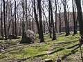 Park Koplis - panoramio - Aulo Aasmaa (2).jpg