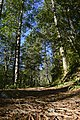 Park prirode Šumski kompleks oko višegradske banje 09.jpg