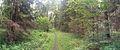Parque Nacional de Białowieża - Caminando por el bosque (33530254561).jpg