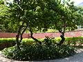 Parque del Este 2012 075.JPG