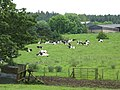 Pasture below White House Farm - geograph.org.uk - 498939.jpg