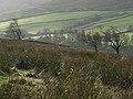 Pastures, High Ashgill - geograph.org.uk - 285898.jpg