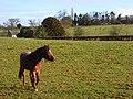 Pastures, Lambourn Woodlands - geograph.org.uk - 724838.jpg