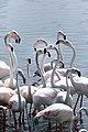 Pat of flamingos giving me the eye.jpg