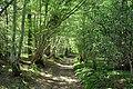 Path in Marline Wood - geograph.org.uk - 419833.jpg