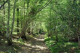 Marline Valley Woods