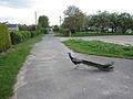 Peacock on Mortimer Lane (geograph 2008555).jpg