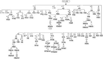 Haplogroup H (mtDNA) - Phylogenetic tree of haplogroup H