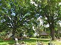 Piękne i dorodne drzewa na terenie cmentarza.JPG