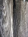 Picea abies old boards on a barn.JPG
