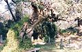 PikiWiki Israel 3262 Gan-Shmuel zk12- 15.jpg