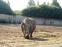 PikiWiki Israel 53089 wildlife animals.jpg
