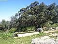 Pilón de Aguanueva.jpg