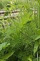 Plant - Kitchener, Ontario 14.jpg