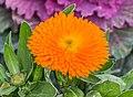 Plant in Jardins de la Fontaine in Nimes 08.jpg
