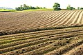 Ploughed field near Dunmurry - geograph.org.uk - 1300391.jpg