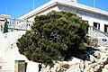 Pollença - Ma-2210 - Cap de Formentor - Ephedra fragilis 04 ies.jpg