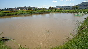Fishing in Uganda - fish breeding pond at Aquaculture Research and Development Centre, Kajjansi