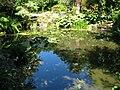 Pond in Trengwainton Garden - geograph.org.uk - 1388114.jpg
