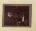 Portrait of Rev Father Callaghan Photo 3 A (HS85-10-13924) original.tif