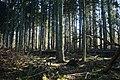 Potthaeger Wald 20190227 03.jpg