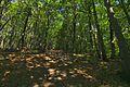 Prírodná rezervácia Borsukov vrch, Národný park Poloniny (15).jpg