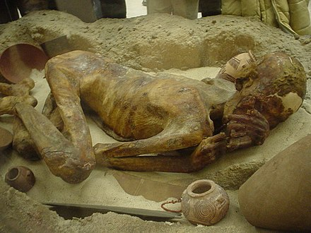 A naturally mummified body in the British Museum. Predynastic human mummy, EA 32751.jpg