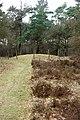 Prehistorische grafheuvels bij Toterfout - Halve Mijl 12.JPG