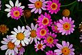 Pretty-flowers - Virginia - ForestWander.jpg
