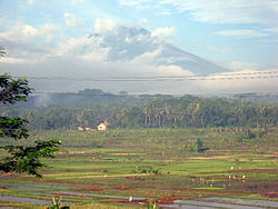 Rice fields in Pringsurat, Temanggung Regency.