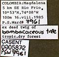 Pseudomyrmex curacaensis casent0005872 label 1.jpg