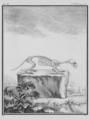 Putois, Squelette - Polecat, Skeleton - Gallica - ark 12148-btv1b2300254t-f26.png