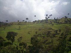 Quindio, Colombia.jpg