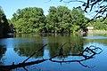 Réserve naturelle régionale des étangs de Bonnelles le 26 mai 2017 - 41.jpg