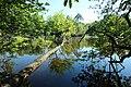 Réserve naturelle régionale des étangs de Bonnelles le 26 mai 2017 - 61.jpg