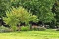 Römischer Gutshof 'Seeb' in Winkel bei Bülach - Schaugarten 2011-09-17 16-54-06.JPG