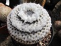 Raccolta succulenti Savona (7).jpg