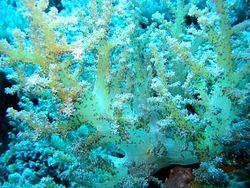 Reef4313 - Flickr - NOAA Photo Library.jpg