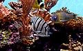Reef Fish (23563499860).jpg