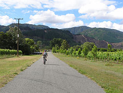 A country road and vineyard in Renwick