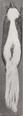 Revision of the skunks of the genus Chincha (1901) pl. 2 M. m. estor.png