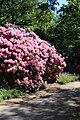 Rhododendronpark Bremen 20090513 113.JPG