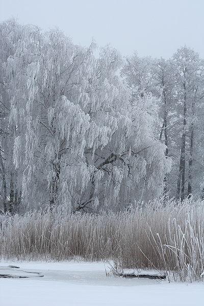 File:Rime in Lapinlahti Helsinki 2.JPG