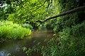 River Darenth near Shoreham - geograph.org.uk - 192245.jpg